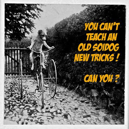 teach-old-dog-new-tricks.jpg.14e2cdf212d6ad090faeb9029910fa00.jpg