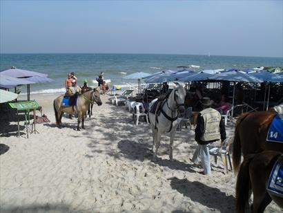 Donkeys on the beach Hua Hin 23.12.11 resize.jpg