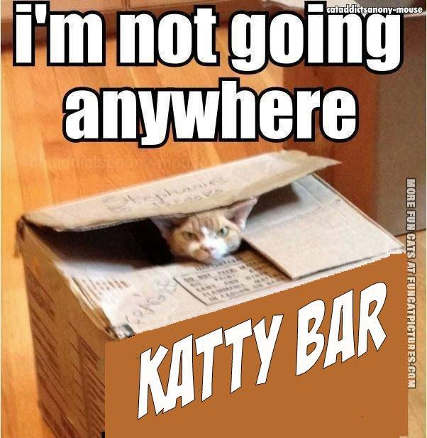 funny-cat-picture-im-not-going-anywhere-and-neither-is-the-box.jpg.ec44a7b8f23dc3b101f32ae552aea9f0.jpg